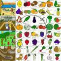 Naučné karty - Ovoce a zelenina